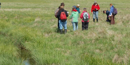 Riparian Health Assessment and Plant ID Training - Joffre, AB. July 23, 2019