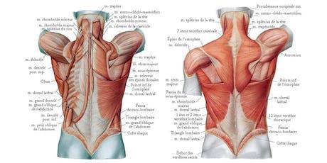 Comment soulager son dos, exercices pratiques billets