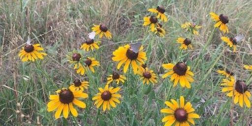 Pocket Prairies: Creating Habitat for Pollinators