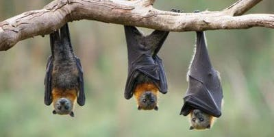 Warfield Environment Group Bat Walk 2019
