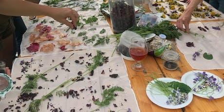 Herbal Skin Care: Natural Dye & Herbalism tickets