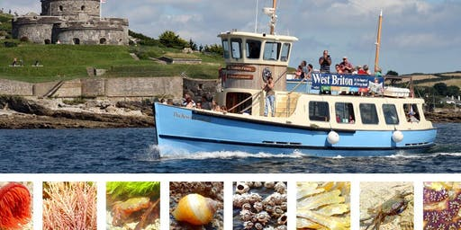 St Mawes Ferry Boat Rock Pooling Adventure!!