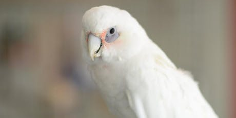 A Parrot's Point of View: Free parrot care class tickets