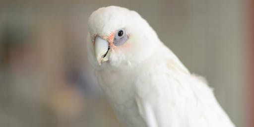 A Parrot's Point of View: Free parrot care class