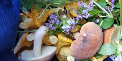 Summer Foraging & Mushrooming