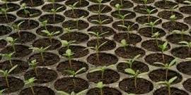 Home Education Program - Plant Propagation