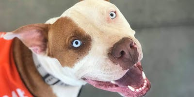 PetSmart Puppies & Dogs Adoption Event - Sedona, AZ