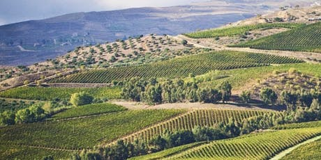 Italian Southern Kissed Wines for Summer tickets