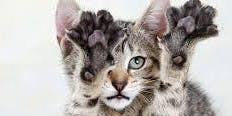 Feline Rescue Cat Claw Clipping Clinic
