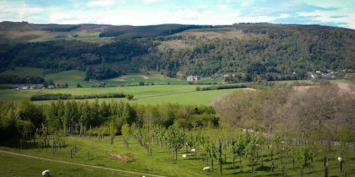 Trees: a crop with many benefits