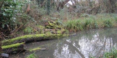 Loop Walk between Hanworth and Feltham including three rivers