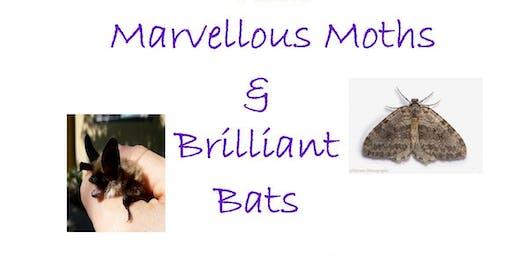 Marvellous Moths and Brilliant Bats