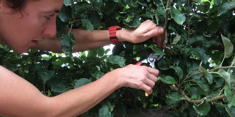 Summer Pruning at Forest Farm Peace Garden with Dr Anna Baldwin tickets