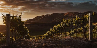 Sunset in the Vines