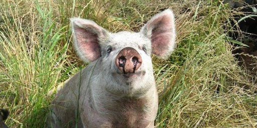 Swine Nutrition and Systems Management Workshop - Norwich, VT