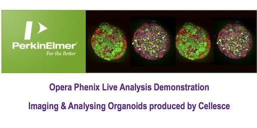 Imaging & Analysing Organoids on the Perkin-Elmer Opera Phenix