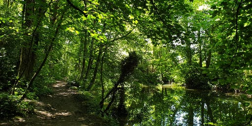 Naturally In Tune Forest Bathing Event