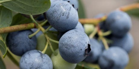 Edible Landscape Series: Getting Fruity in the Garden tickets
