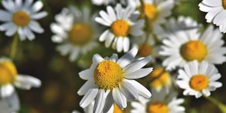 Presentación curso Experto/a en Aromaterapia Integrada entradas