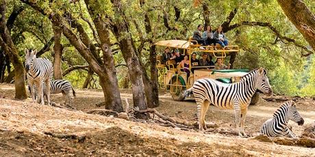 Wildlife Photography and Safari Photo Shoot with Karen Schuenemann & Nikon - 2 Part Workshop tickets