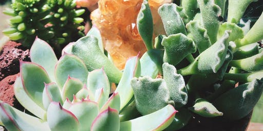Crystals & Succulents!