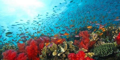 SeeREEF Ecology Education - because the more you know the more you see.