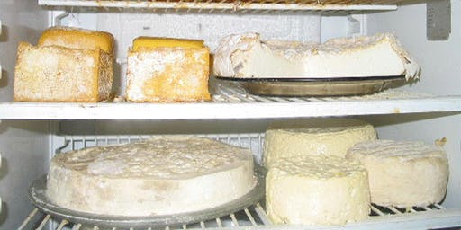 Cheese, Sourdough & Fermented Foods Workshops - Samford 24th August