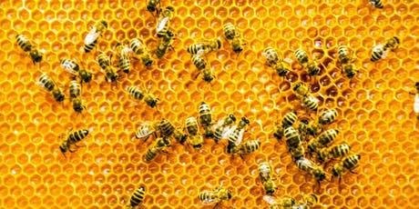 Bees and Beekeeping @ Korumburra Library brought to you by the South Gippsland Beekeepers tickets