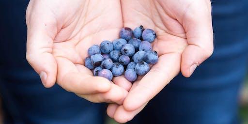 Blueberry Masterclass
