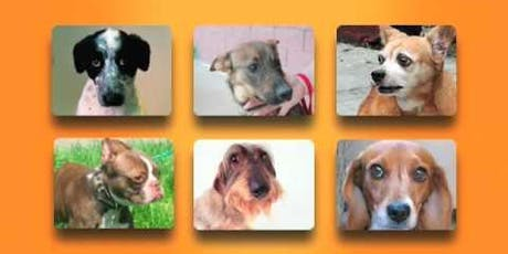 LEARN TO LISTEN TO YOUR DOG - CANINE COMMUNICATION LECTURE tickets