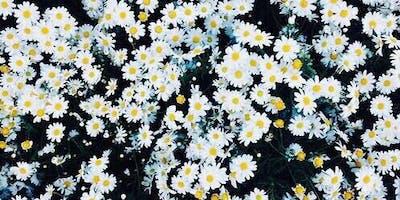 Daisy Magic