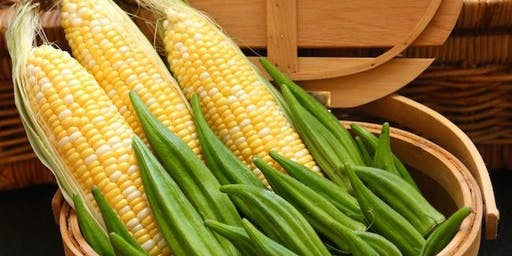 Corn, the Golden Essence of Summer and Okra, A Garden Giant