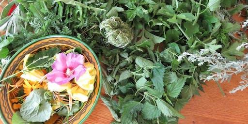 Atelier de cueillette et cuisine de plantes sauvages