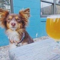 Dog Daze of Summer Social