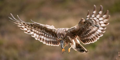 Hen Harrier Day 2019 tickets