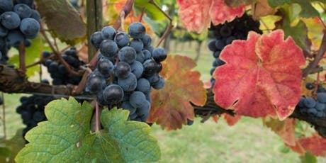 Pre-Harvest Checklist - Making the Most of Your Vineyard's Harvest tickets