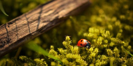 Observing the Micro World in Nature tickets