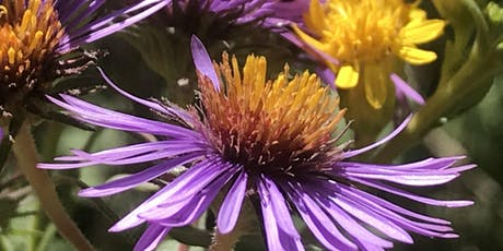 2019 Wildflower Walks at North Pond Nature Sanctuary, Lincoln Park tickets