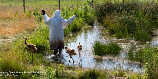 My Adventures to Help Save Cranes in the Wild