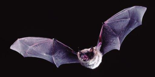 VIMC Bat Camp