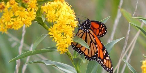 August Nature Program: Belle Isle Butterflies