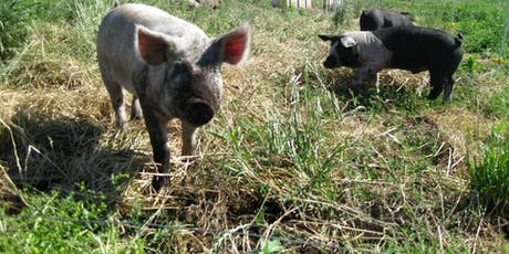 Swine Nutrition and Systems Management Workshop - South Hero, VT tickets