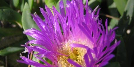 NaturallyGC Grow me Instead - Native Gardening Forum tickets