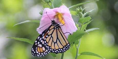 An Introduction to Monarchs, Migration, and Our Native Milkweed tickets