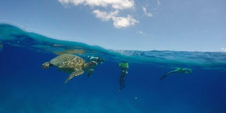 Parents' Day Snorkel and Boat Cruise with Wild Sea Turtles tickets