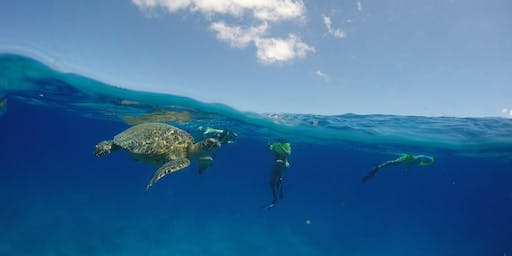 Parents' Day Snorkel and Boat Cruise with Wild Sea Turtles