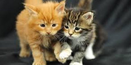 Women of Willow Grove meet the KITTENS!  #WOW - EVERYONE invited!  tickets