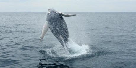 Greening the Sphere Group Whale Watch tickets