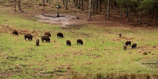 Wild bespieden op de Veluwe met Staatsbosbeheer