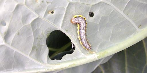Garden Pest Identification - workshop
